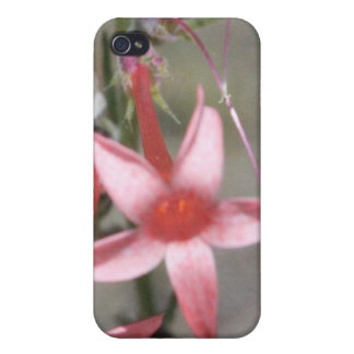 Rote Wildblume 4/4s iPhone 4 Cover
