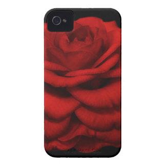 Roter Kamelie iPhone Kasten Case-Mate iPhone 4 Hüllen