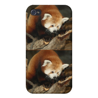 Roter Panda iPhone 4 Case