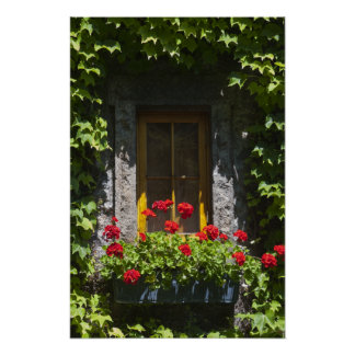 Roter Pelargonie-Fenster-Blumen-Kasten Poster