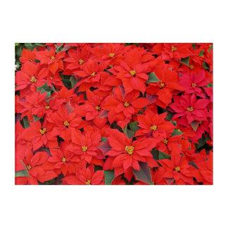 Roter Weihnachtsfeiertags-BlumenFoto der Acryldruck