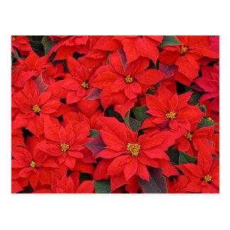 Roter Weihnachtsfeiertags-BlumenFoto der Postkarte
