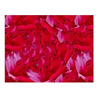 Rotes Blumen-Muster Postkarte