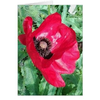 Rotes Mohnblumen-Foto grüßen Karte u. richten
