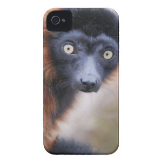 Rotes Ruffed Lemur-BlackBerry-mutiger iPhone 4 Hülle