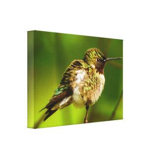 Rubin-Throated Kolibri-Leinwand-Druck Leinwanddruck