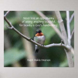 Rubin-throated Kolibri Poster