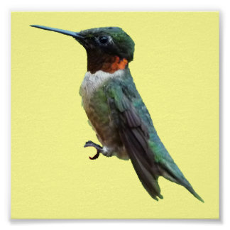 Rubin-Throated Kolibri-Vogel-Fotografie Poster