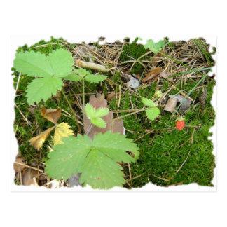 Russische Erdbeere im Wald Postkarte
