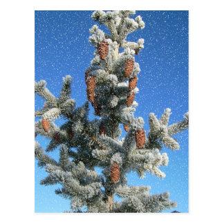 rustikales Landweihnachtsschnee pinecone pinetree Postkarte