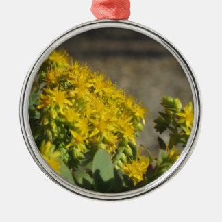 Saftige Pflanze mit gelben Blumen Rundes Silberfarbenes Ornament