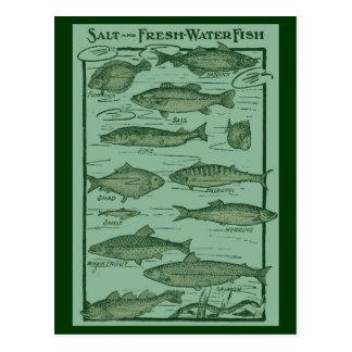 Salz-und Süßwasserfisch-Diagramm Postkarten