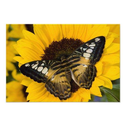 Sammamish, tropischer Schmetterling 38 Washingtons Kunstphotos