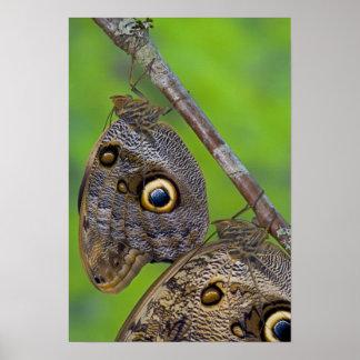 Sammamish, Washington. Tropische Schmetterlinge 10 Poster