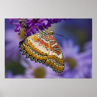 Sammamish, Washington. Tropische Schmetterlinge 3 Poster