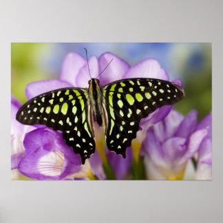 Sammamish, Washington. Tropische Schmetterlinge 44 Poster