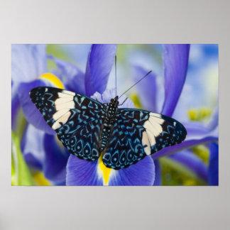 Sammamish, Washington. Tropische Schmetterlinge 56 Poster