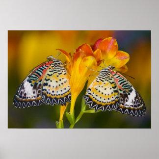 Sammamish, Washington. Tropische Schmetterlinge 6 Poster