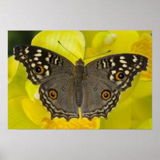 Sammamish Washington tropischer Schmetterling Poster