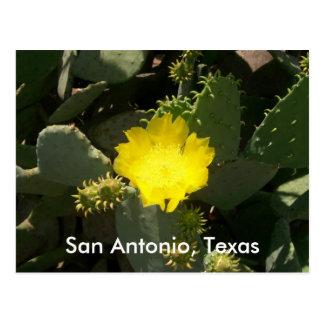 San Antonio, Texas Postkarte
