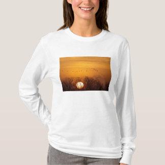 Sandhill Kräne silhouettierten aginst aufgehende T-Shirt