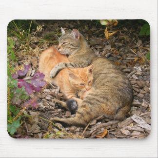 Säuglings-Ingwer-Katze Mauspads