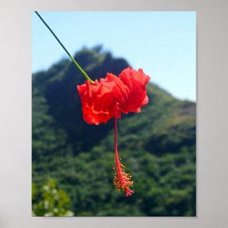 Scarlet-Hibiskus in Hawaii Poster