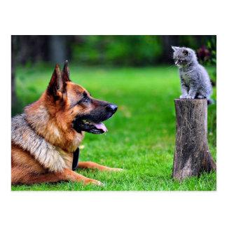 Schäferhund, der hinunter ein graues Kätzchen die Postkarten