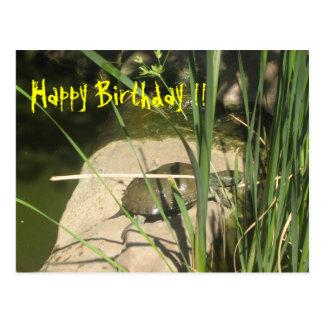 Schildkröte kommt aus dem Wasser Geburtstagskarte Postkarten