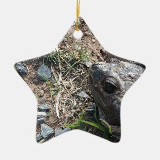 Schildkröte-Kopf Keramik Ornament