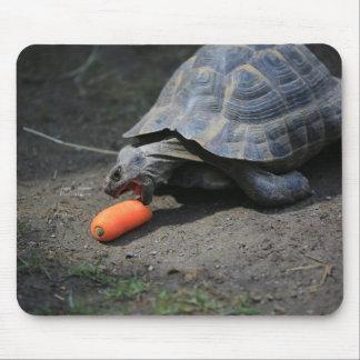 Schildkröte-Mittagessen Mousepads