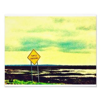Schildkröte-Überfahrt Kunstfotos