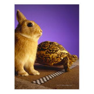 Schildkröte und die Hasen Postkarte