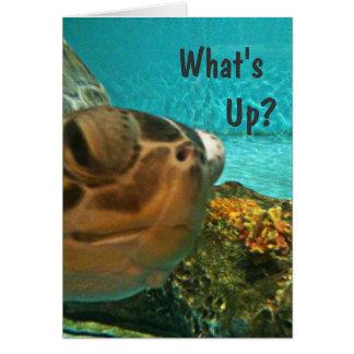 Schildkröte, was herauf Selfie ist Karte