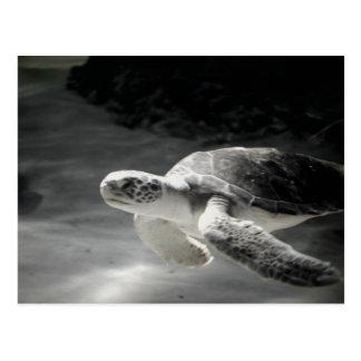 Schildkrötebehälter Grüße Postkarte