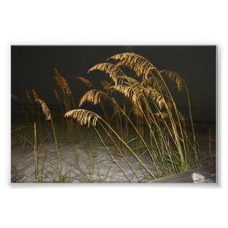 Schilfe auf dem Strand nachts Foto Drucke