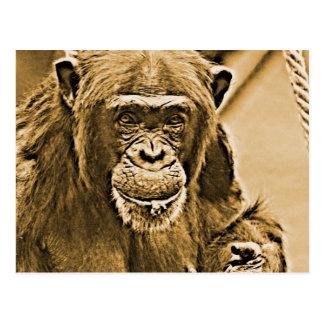 Schimpanse 216 postkarte
