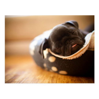 Schlafenschwarzer chinesischer Mops-Welpen-Hund Postkarten