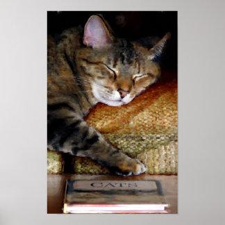 Schläfrige Katzen-Buch-Malerei Poster