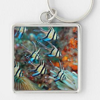 Schlüsselring mit Kardinalsfischentwurf Schlüsselanhänger