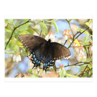 Schmetterling auf Blaubeere Bush Postkarte