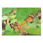 Schmetterling Karten