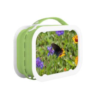 Schmetterlings-Brotdose Brotdose
