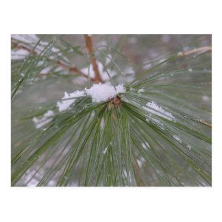 Schnee auf den Kiefern-Nadeln Postkarte