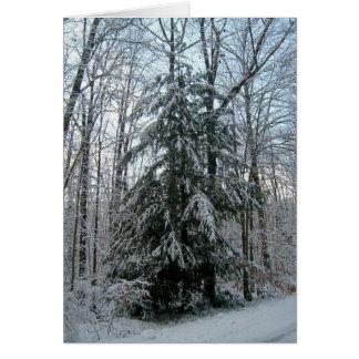 Schnee bedeckte Pinetree Karte