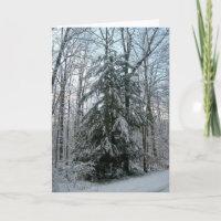Schnee bedeckte Pinetree