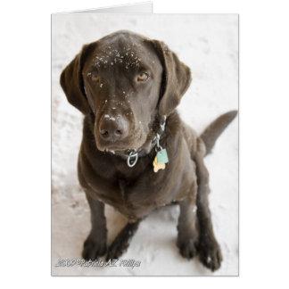 Schnee besprühter Schokoladen-Labrador Mitteilungskarte