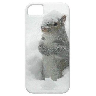 Schnee-Eichhörnchen iPhone 5 Fall iPhone 5 Case