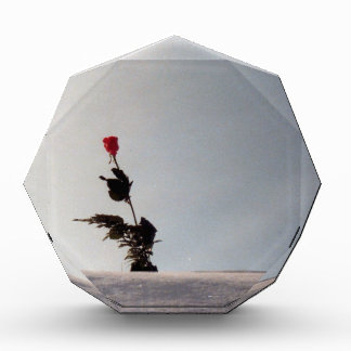 Schnee tötet nie meine Rose Auszeichnung