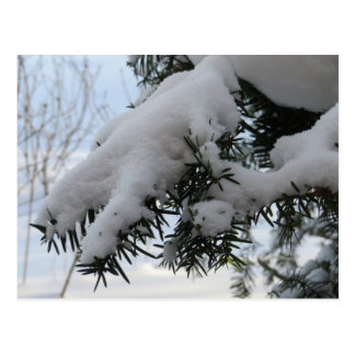 Schnee und Eis auf Pinetree Postkarte